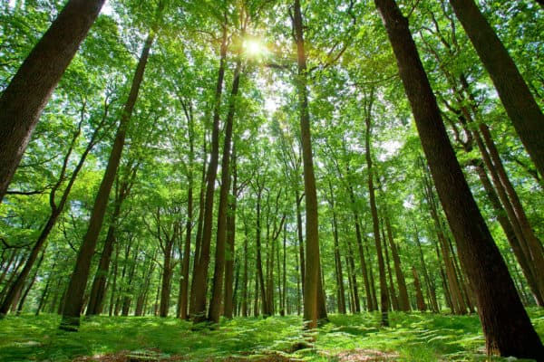 France --- Forest with Sun Behind --- Image by © Ocean/Co